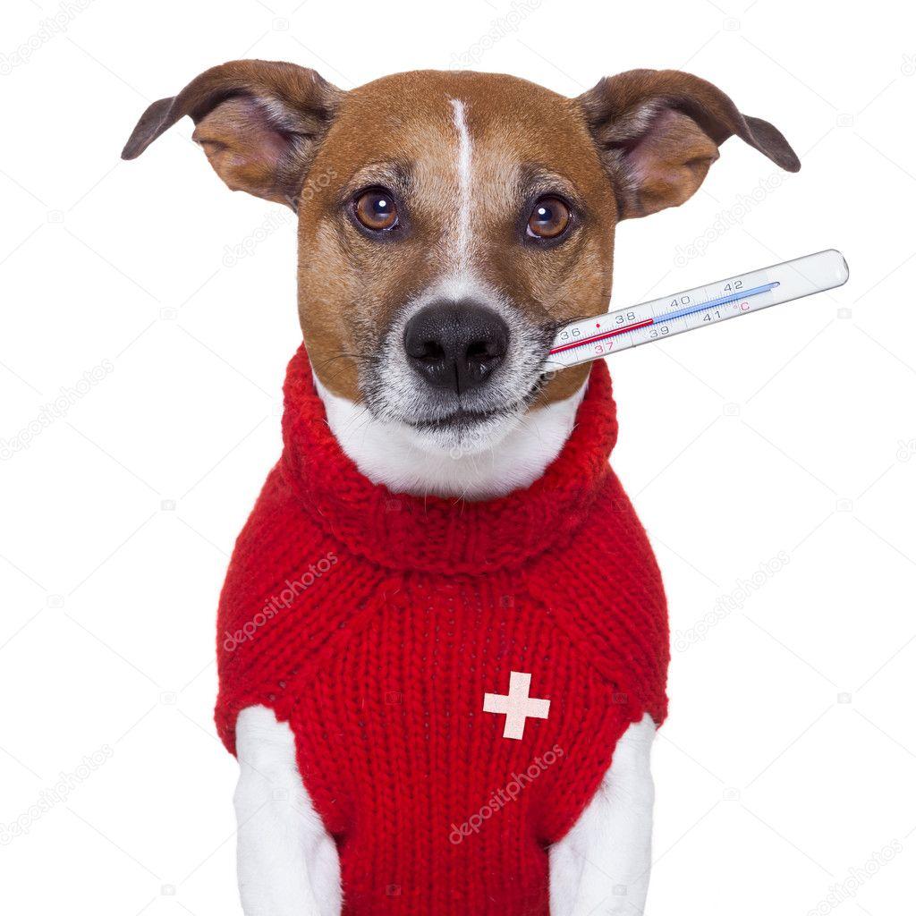 depositphotos_18926733-stock-photo-sick-dog