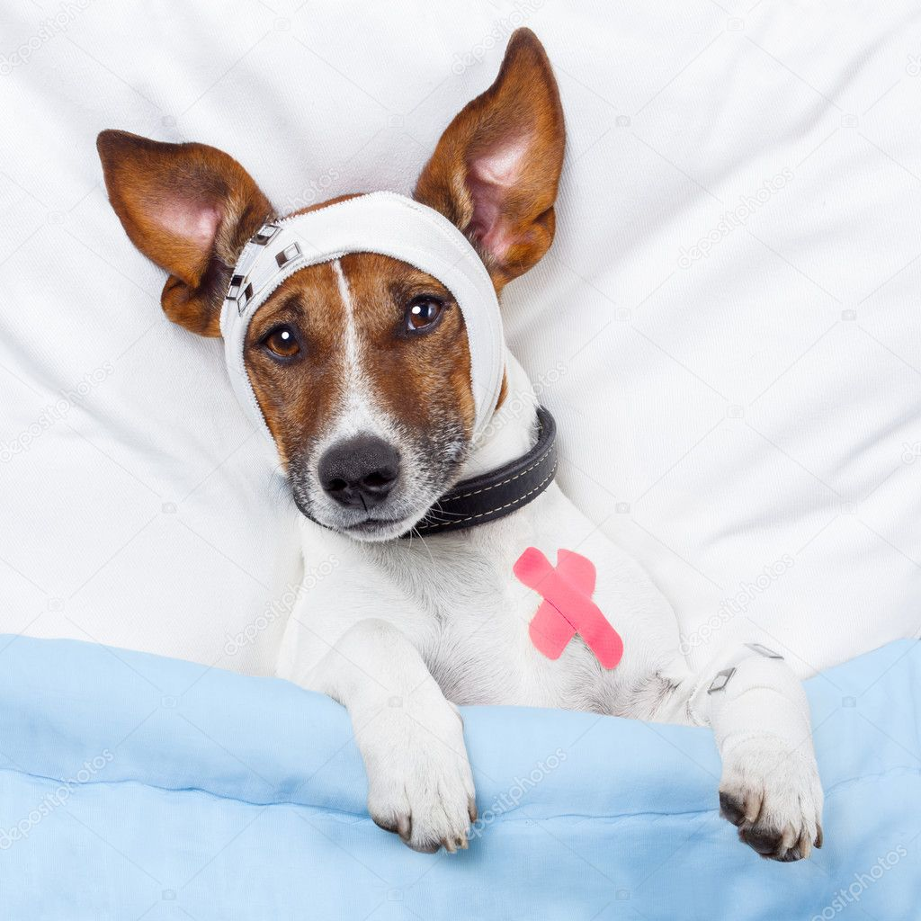 depositphotos_10153502-stock-photo-sick-dog-with-bandages-lying