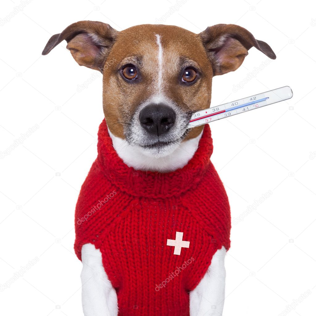 depositphotos_18926733-stock-photo-sick-dog